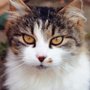 Animals & Pets thumb