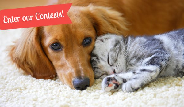 Page-A-Day® Calendar Pet Contests thumb